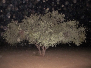 Orbs Party Tree