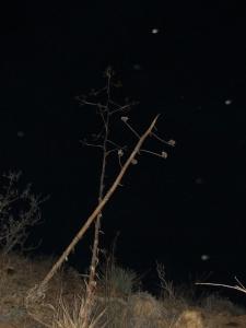 stormy night orbs Cheyenne MacMasters 6
