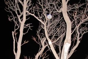 chinaberry orb Cheyenne MacMasters