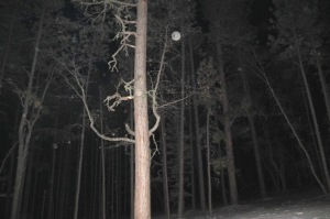 orbs in forest