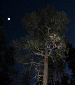 tear drop orb in forest