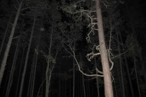 orbs in Forest Cheyenne MacMasters