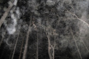 forest orbs Cheyenne MacMasters