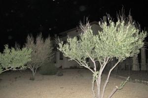 Loma Linda Orbs