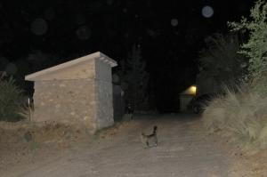 cat orbs (c) Cheyenne MacMasters 2013