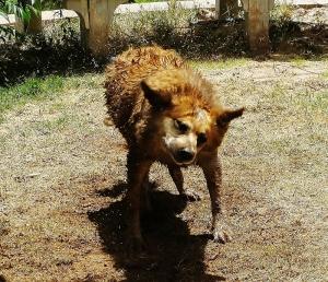 dog (c) Cheyenne MacMasters 2013