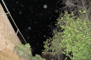 orbs (c) Cheyenne MacMasters 2013
