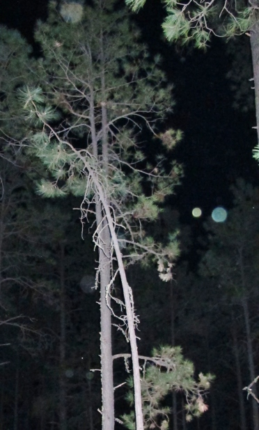 orb photo Alpine Arizona