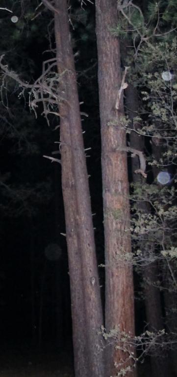 orb photo Alpine Arizona