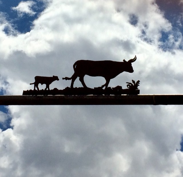 Cattle in the Sky